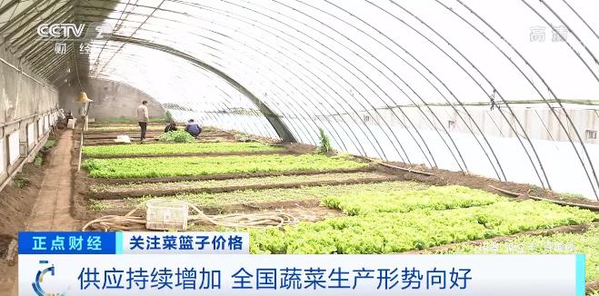 全国蔬菜生产形势向好 供应充足