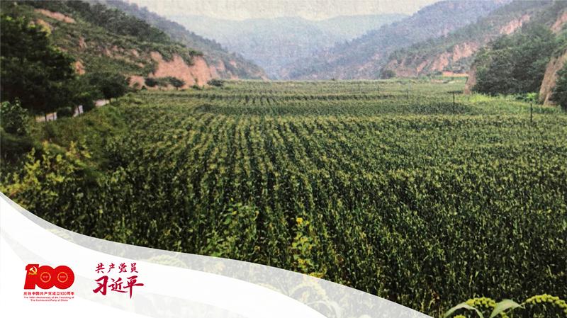 习近平带领梁家河村民修建的淤地坝。 (图片来源于《习近平的七年知青岁月》)