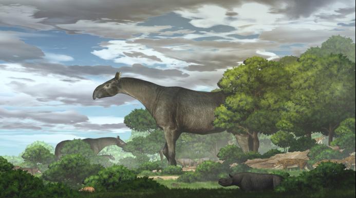 甘肃临夏发现巨犀化石:有4头大象那么重,曾迁徙穿越青藏高原插图