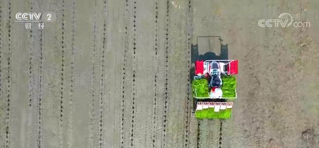 江苏全省水稻播栽工作基本结束 科学调度节本增效