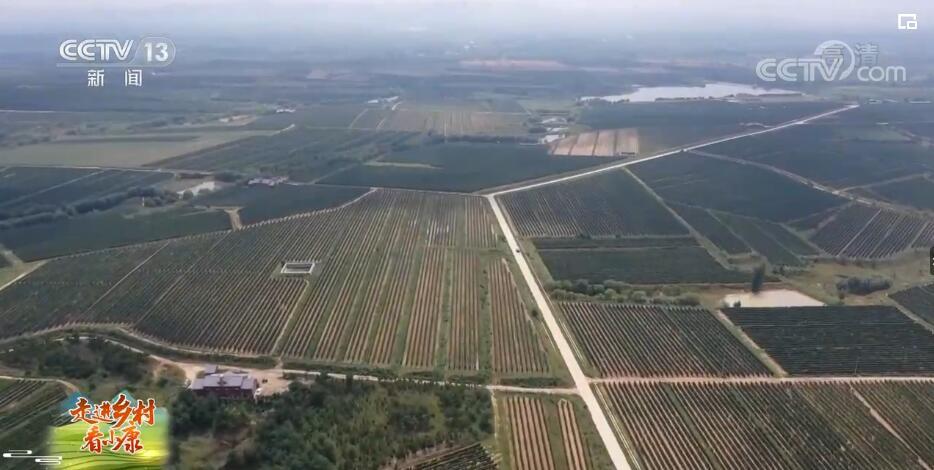 走进乡村看小康 | 山东烟台东王村:葡萄美酒富农家 贫瘠土地变身致富高地