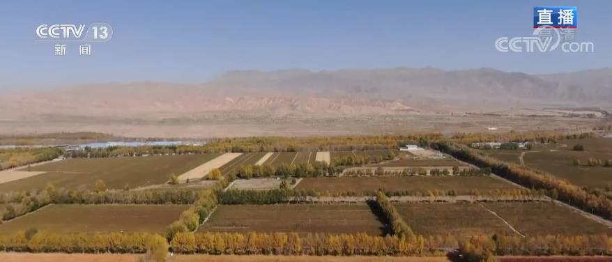 青海乌兰:藜麦成熟丰收季 姹紫嫣红如画卷
